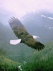 vultur-180